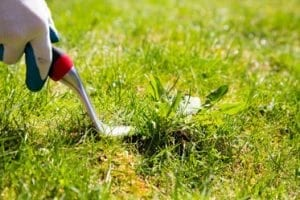 Cutting grass — Pest Control in Winnellie, NT