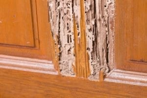 Termites on wood — Pest Control in Winnellie, NT